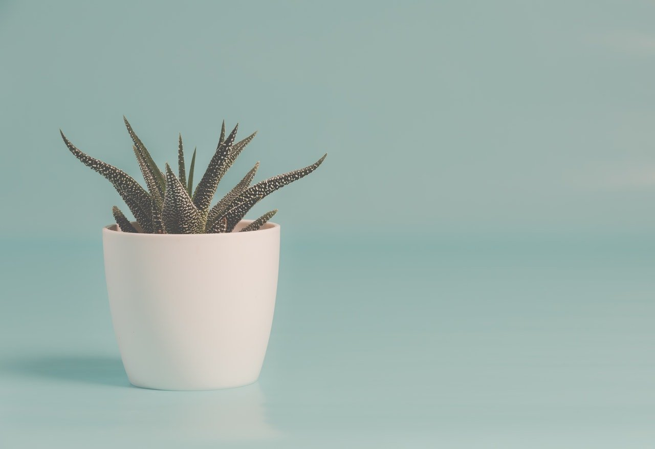 Buy A House Plant / Organize Your Space / Rearrange Your Furniture